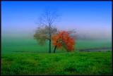 Misty Morning Autumn