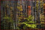 Smokey Mountain Forest
