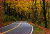 Windy Autumn Road