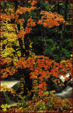 Franconia Notch Creek in Autumn