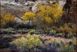 Capitol Reef Autumn