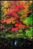 Creekside Autumn Splendor