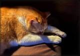 Nap Time 🐈