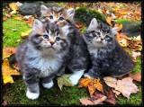 Autumn Kitties 🐈