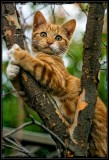 Hanging On To Life 🐈