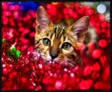 Ruby Petals