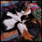 Kozzy Kitties 🐈