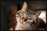 I've got my eyes on Youuuuu 🐈