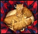 Kozy Kitty Klub 🐈