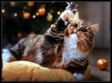 Happy Holidays 🐈