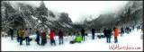 Winter Wonderland 🌲