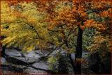 Autumn Transformation