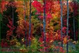 Autumn Auroras of Colours