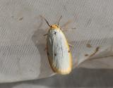 Vit borstspinnare   Cybosia mesomella