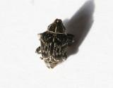 Curculionidae   Vivlar