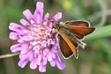 Butterflies/Fjärilar