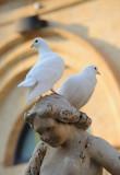 Dove (town of Noto)