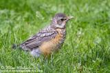 Birds in Central Park