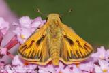 Central Park Butterflies