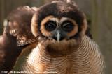 April 22, 2019 - Texel Zoo (NL)