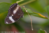 September 23, 2018 - Vlinderparadijs Papiliorama (NL)