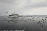 Eagle cruise at Rausu