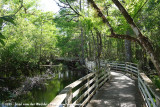 Corkscrew Swamp