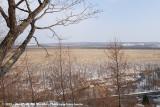 Kottaro Wetlands