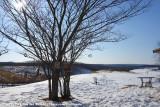 Heart 'n Tree