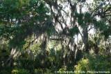 Dramatic Forest in Oscar Scherer
