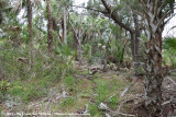 Florida Palm Hammock