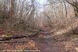 Wild Bird Forest Trail