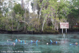 Snorkling with Manatees