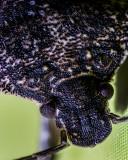 Bug At 4 X Magnification