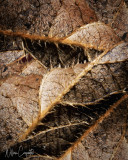 Leaves, an Autumn Abstraction