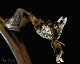 Hosta Remnants  2 X Magnification  32 Image Stack rendered in HeliconFocus