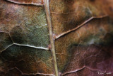 Anatomy of a Leaf, it's lifeline Arteries and Veins. Quite Amazing