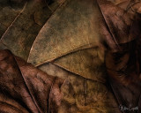 Leaf Detail  62 images stacked and rendered in HeliconFocus