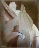 Garlic_1.jpg