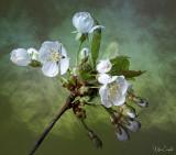 macro and closeup photography