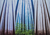 Poplars-x-3