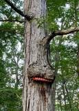 Tree consuming 'no hunting' sign