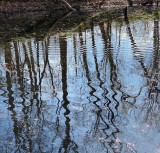 Trees translated by water