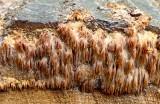 Fungi on cut log