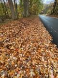 Leaf-lined road