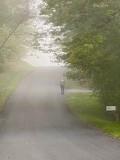 Walker in Fog