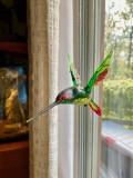 Hummingbird inside
