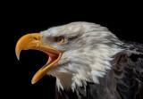 Martha Aguero2020 CAPA Fall NatureThe Eagle Call25.5
