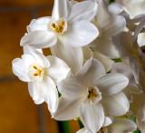 Flowers Gallery #4