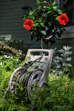 Hose-Reel-and-Hibiscus
